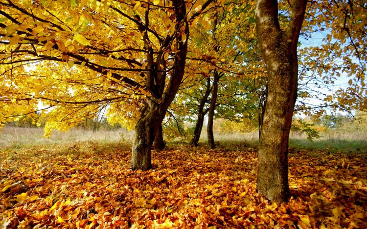 photo, nature, leaves, Trees, hd  desktop wallpapers , Pc backgrounds, free pictures