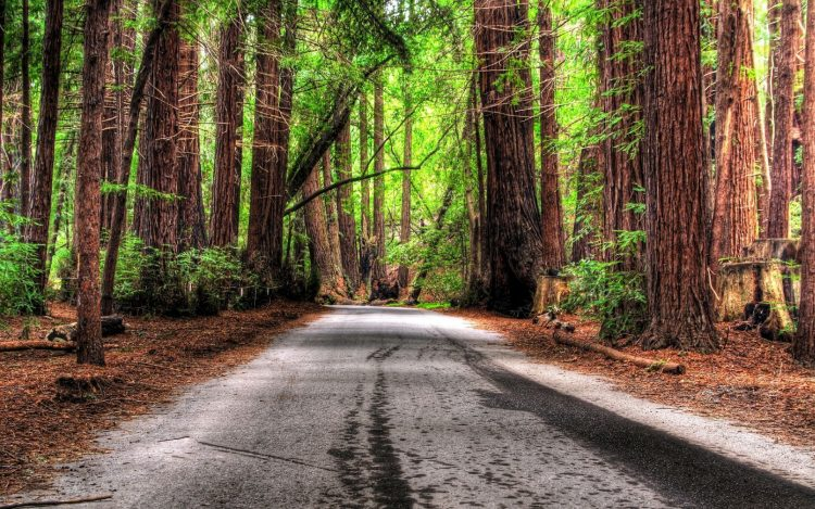 road, romance, photo, Wallpaper, forest, hd  desktop wallpapers , Pc backgrounds, free pictures