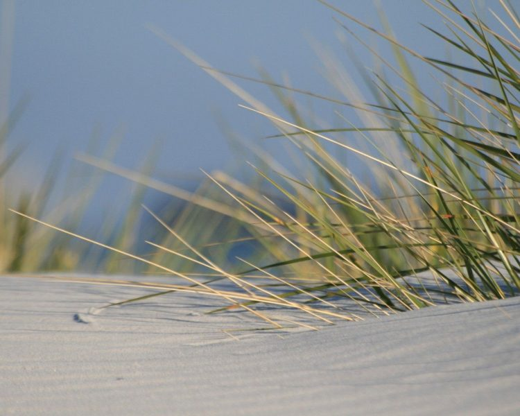 sand, grass, hd  desktop wallpapers , Pc backgrounds, free pictures
