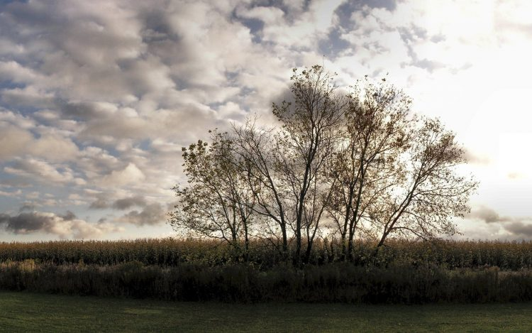 sky, Trees, grass, hd  desktop wallpapers , Pc backgrounds, free pictures
