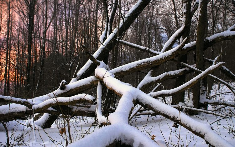 snow, tree, forest, hd  desktop wallpapers , Pc backgrounds, free pictures