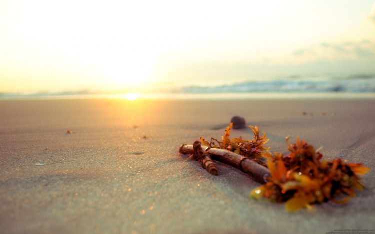 stick, beach, sand, hd  desktop wallpapers , Pc backgrounds, free pictures