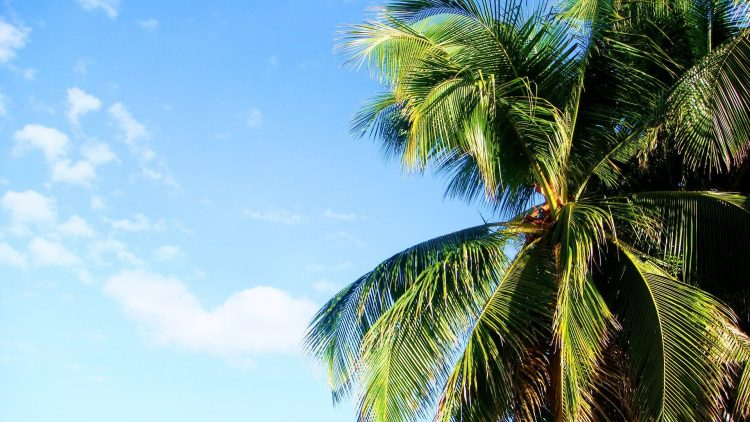 summer, palm, hd  desktop wallpapers , Pc backgrounds, free pictures