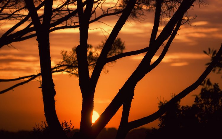 sunset, Trees, hd  desktop wallpapers , Pc backgrounds, free pictures