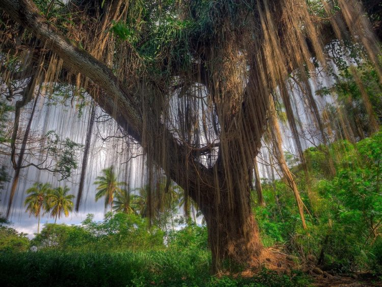 tree, Plants, palm, hd  desktop wallpapers , Pc backgrounds, free pictures
