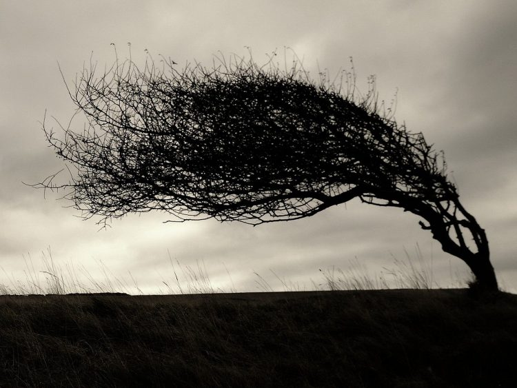 tree, branches, slope, hd  desktop wallpapers , Pc backgrounds, free pictures