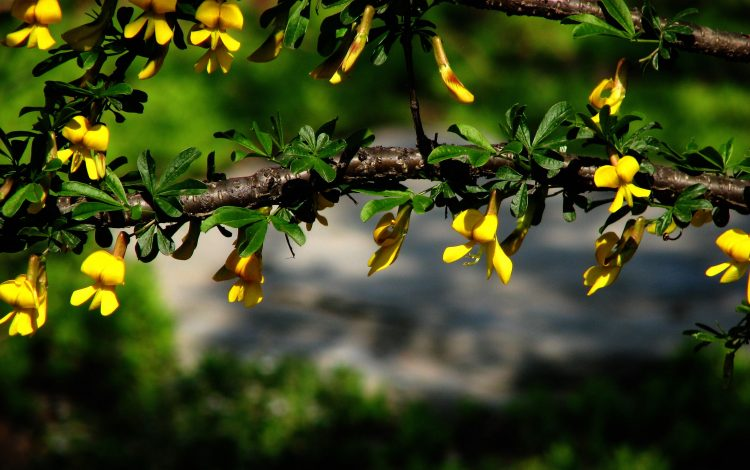 tree, flowers, photo, Macro, beautiful, hd  desktop wallpapers , Pc backgrounds, free pictures