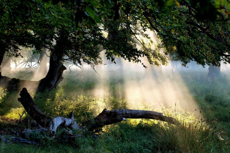 tree, leaves, grass, forest, Rays, light, sun, hd  desktop wallpapers , Pc backgrounds, free pictures