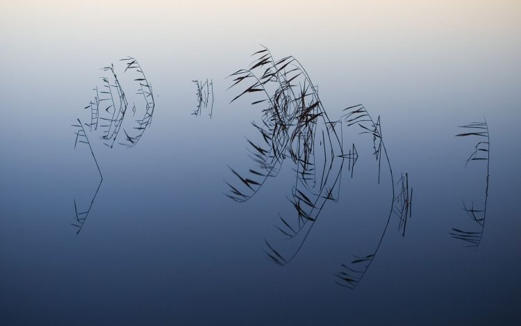 water, reflection, branches, hd  desktop wallpapers , Pc backgrounds, free pictures