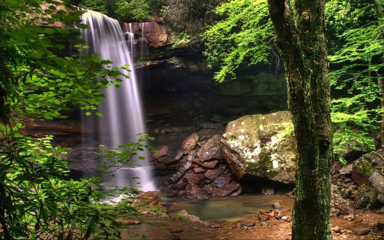 water, stones, greens, Plants, photos, hd  desktop wallpapers , Pc backgrounds, free pictures