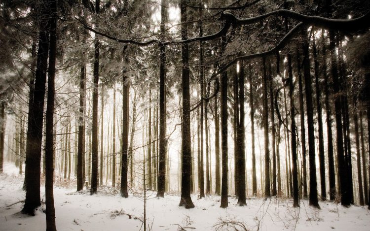 winter, Trees, forest, snow, photo, hd  desktop wallpapers , Pc backgrounds, free pictures