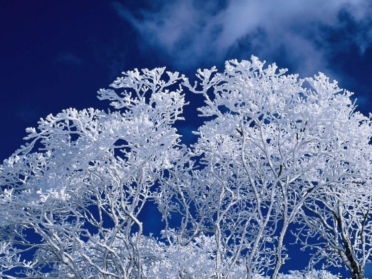 winter, tree, sky, hd  desktop wallpapers , Pc backgrounds, free pictures