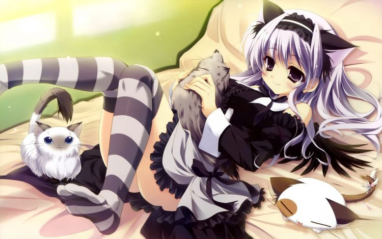 anime, girl, dress, bed, ears, Seals, wallpapers , Pc backgrounds, free photos