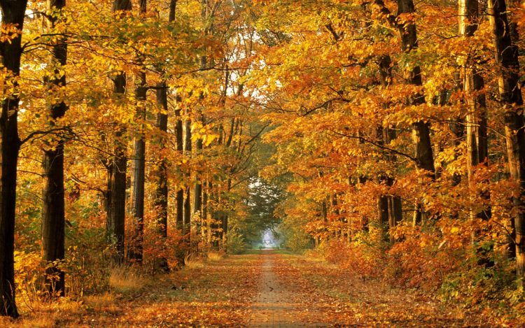 Autumn time, Trees, forest, road, beautiful, wallpapers , Pc backgrounds, free photos