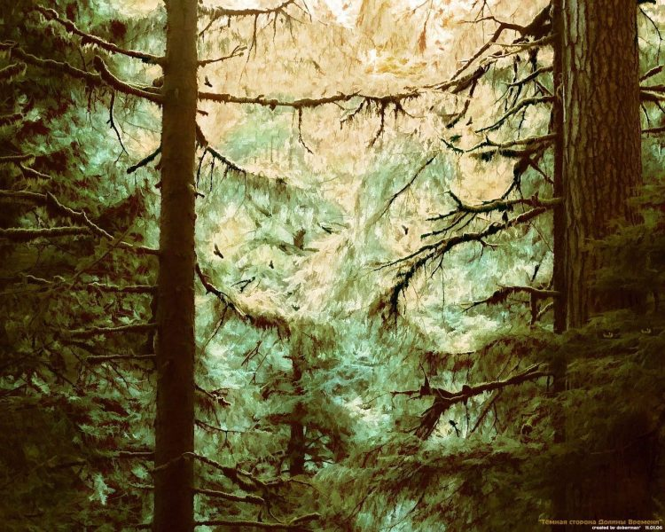 Figure, Trees, thicket, wallpapers , Pc backgrounds, free photos