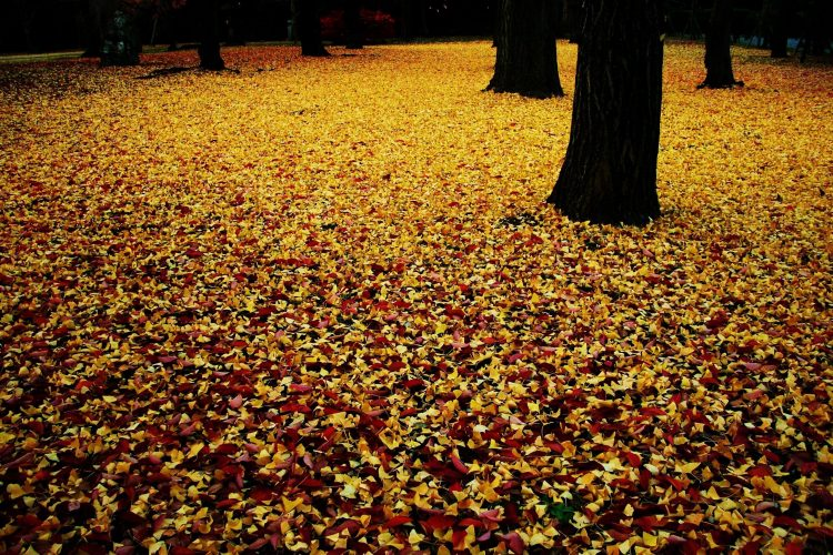 autumn, carpet, leaves, wallpapers , Pc backgrounds, free photos