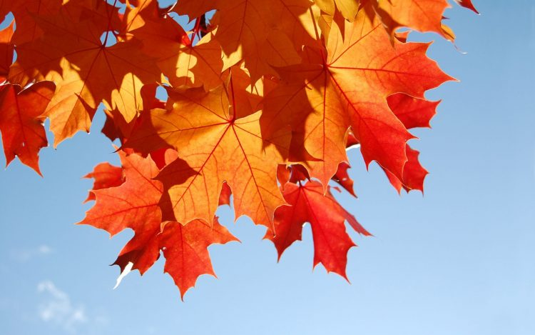 autumn, foliage, wallpapers , Pc backgrounds, free photos