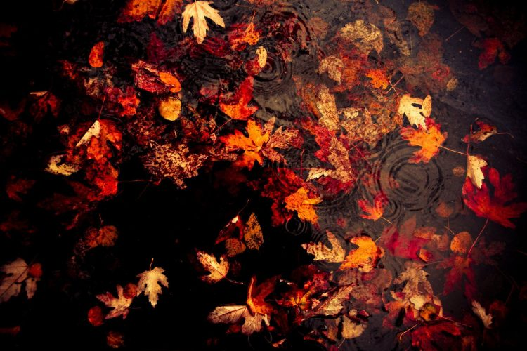 autumn, rain, leaves, wallpapers , Pc backgrounds, free photos