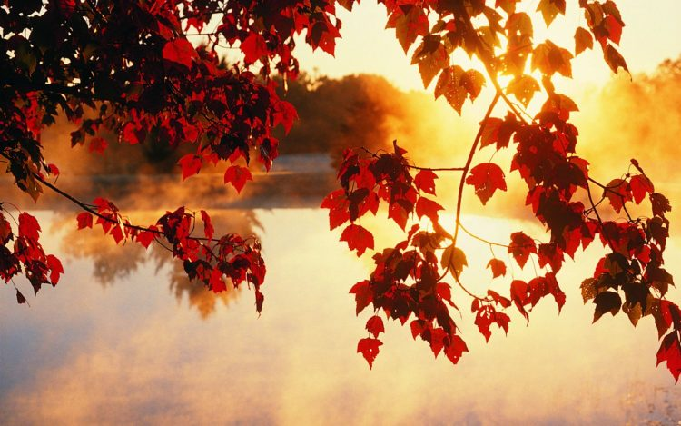 autumn wallpaper, photo, autumn, Trees, leaves, wallpapers , Pc backgrounds, free photos