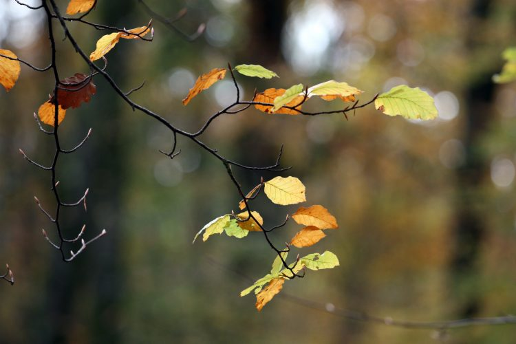 branch, leaves, autumn, wallpapers , Pc backgrounds, free photos