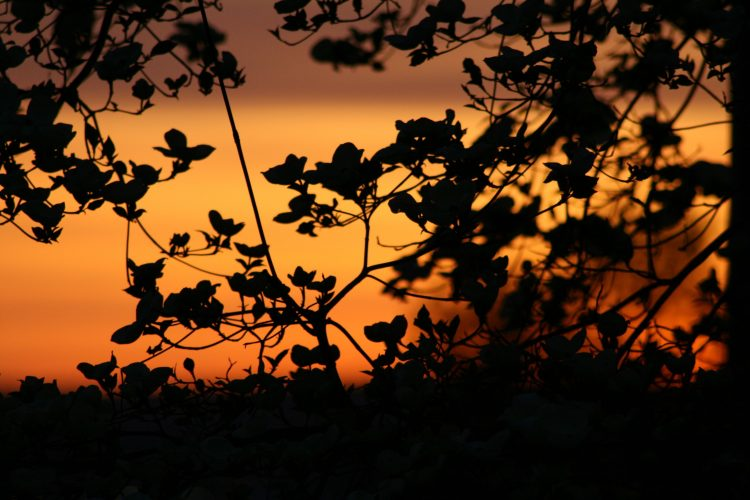 branch, leaves, plant, sky, silence, sunset, wallpapers , Pc backgrounds, free photos