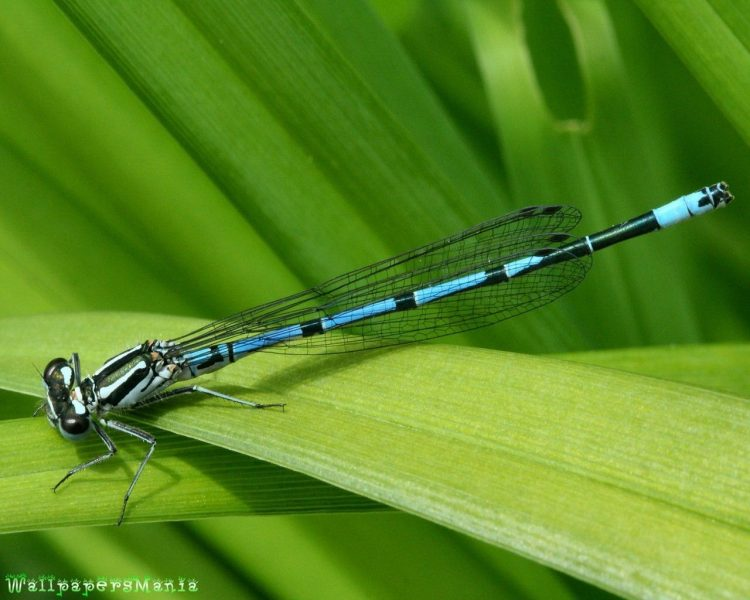 dragonfly, Macro, sheet, grass, wallpapers , Pc backgrounds, free photos