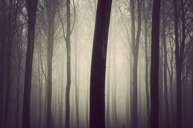 forest, fog, tree, wallpapers , Pc backgrounds, free photos