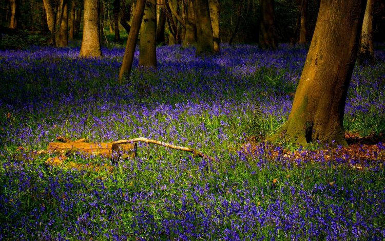 forest, grass, Flowers, wallpapers , Pc backgrounds, free photos