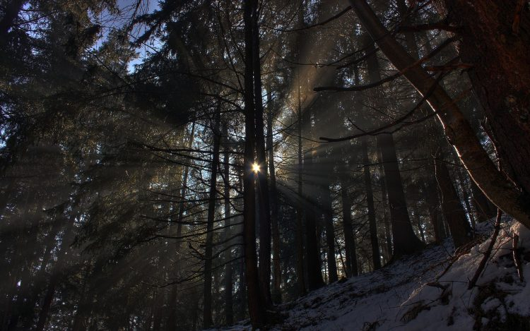 forest, nature, winter, snow, sun, Trees, light, Rays, wallpapers , Pc backgrounds, free photos