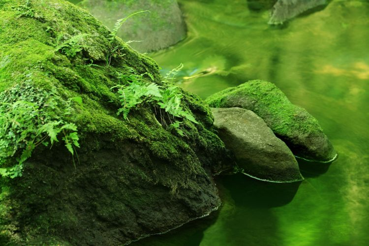 forest, water, river, River, stones, Plants, wallpapers , Pc backgrounds, free photos