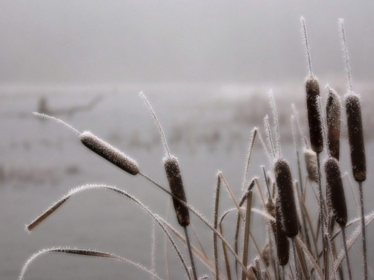 grass, rime, swamp, fog, wallpapers , Pc backgrounds, free photos