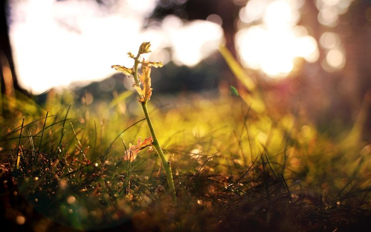 grass, sprout, autumn, wallpapers , Pc backgrounds, free photos