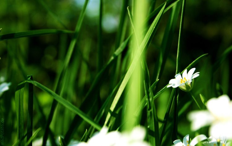 greens, Flowers, wallpapers , Pc backgrounds, free photos