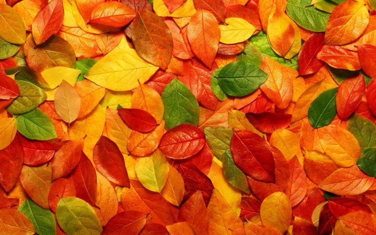 leaves, autumn, wallpapers , Pc backgrounds, free photos