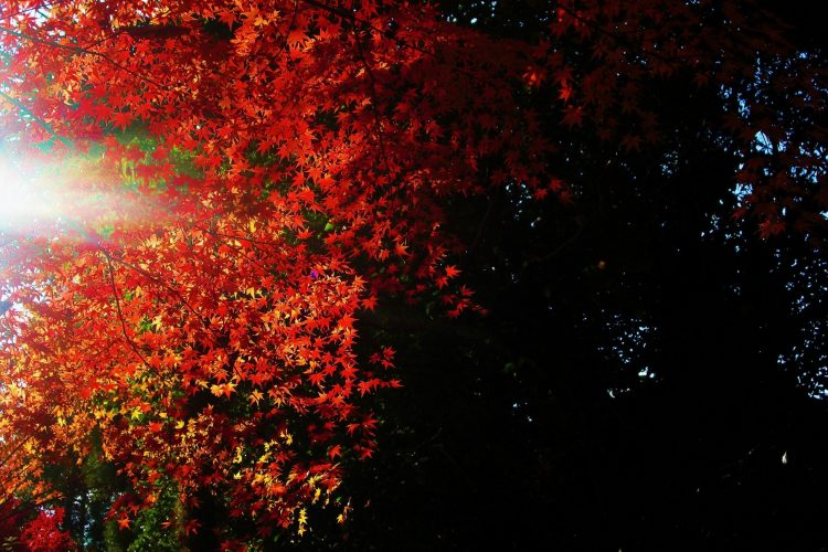 leaves, light, darkness, wallpapers , Pc backgrounds, free photos