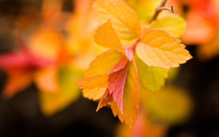 leaves, yellow, wallpapers , Pc backgrounds, free photos
