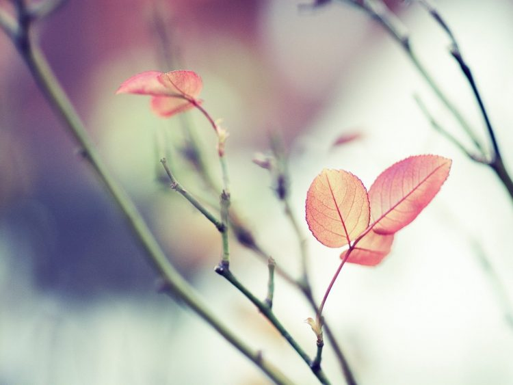 list, branch, out, focus, wallpapers , Pc backgrounds, free photos