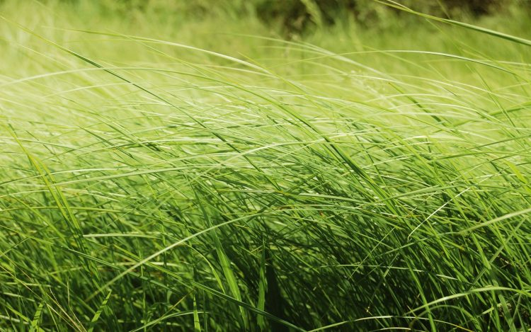 nature, Beauty, grass, photo, field, wallpapers , Pc backgrounds, free photos