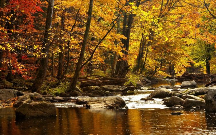 nature, autumn, river, Mountains, Trees, wallpapers , Pc backgrounds, free photos