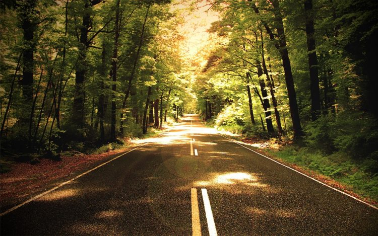 nature, forest, road, way, Trees, photo, wallpapers , Pc backgrounds, free photos
