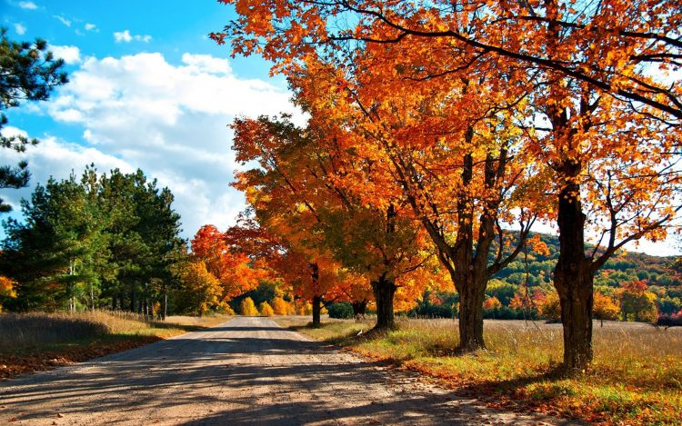 autumn, Trees, road, forest, colors of autumn, wallpapers , Pc backgrounds, free photos