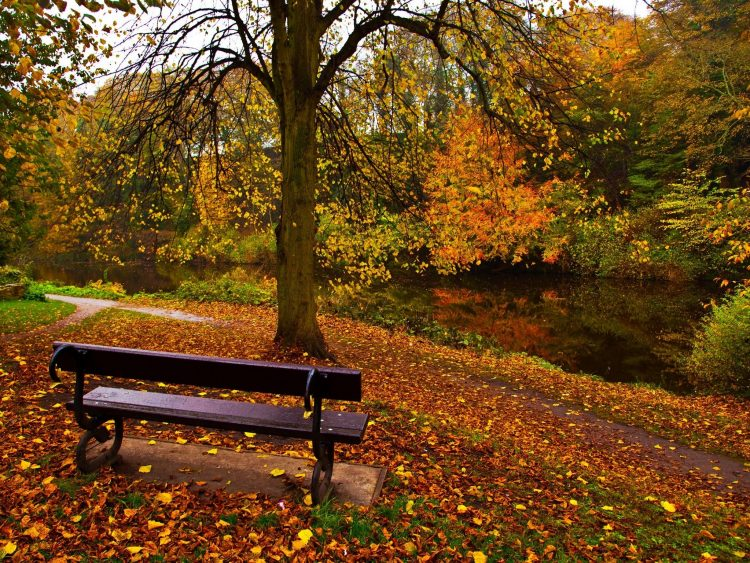autumn, bench, park, wallpapers , Pc backgrounds, free photos