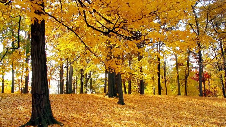 autumn, forest, defoliation, wallpapers , Pc backgrounds, free photos