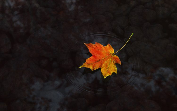 autumn, list, water, wallpapers , Pc backgrounds, free photos