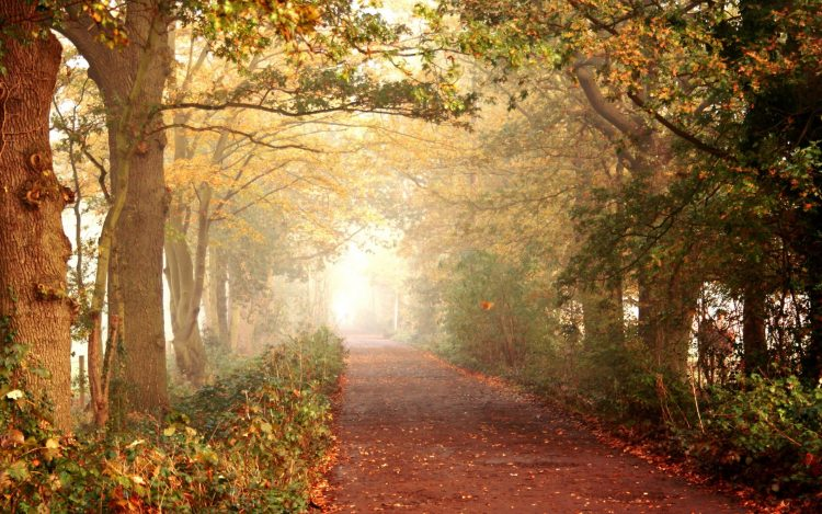 autumn, road, footpath, forest, Trees, wallpapers , Pc backgrounds, free photos