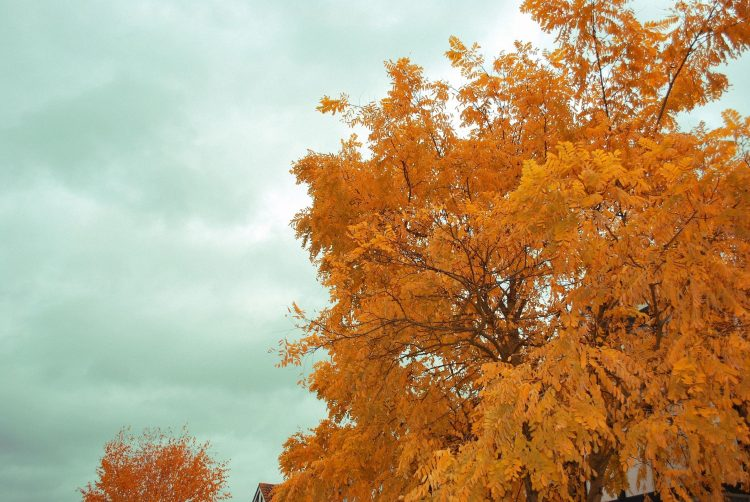 autumn, tree, sky, wallpapers , Pc backgrounds, free photos