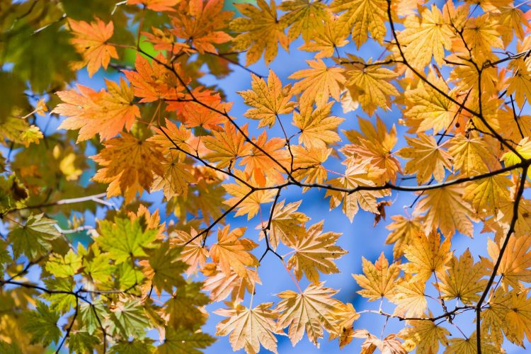 autumn, yellow, leaves, form, from below, wallpapers , Pc backgrounds, free photos