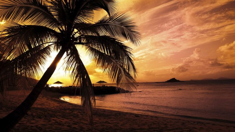 beach, sunset, palm, wallpapers , Pc backgrounds, free photos