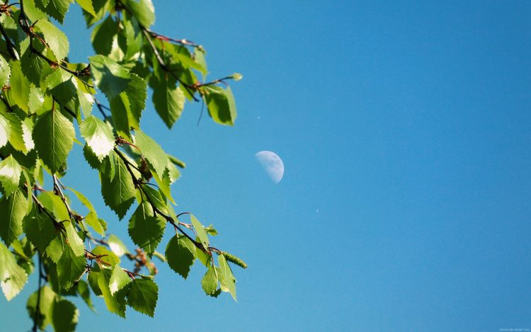 branch, sky, moon, wallpapers , Pc backgrounds, free photos