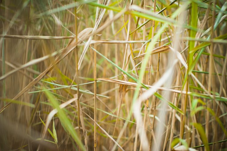 cane, autumn, green, chaos, wallpapers , Pc backgrounds, free photos